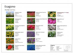 Plantlijst